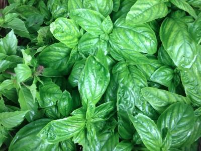国産乾燥バジル自然栽培自家採種