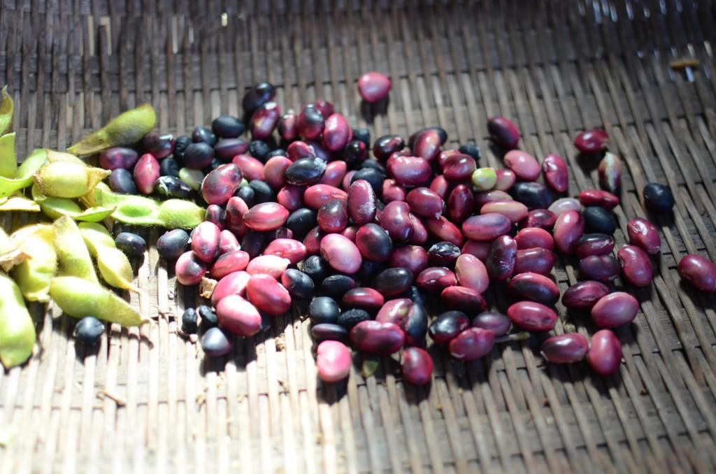 黒大豆生実