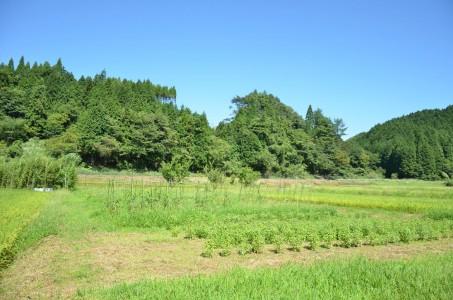 東峰村 ハーブ農園